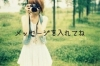恋系①カメラ